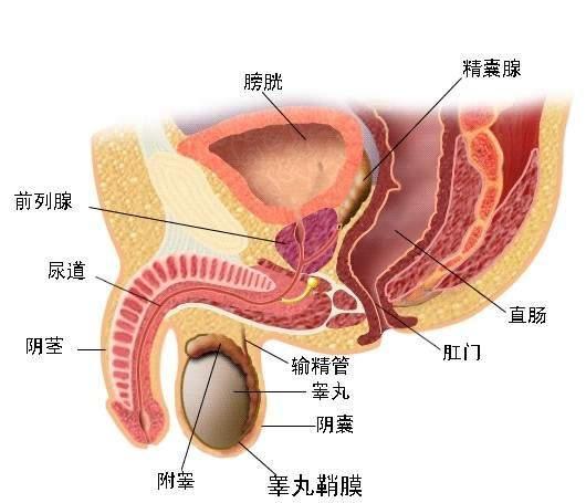 男x怎么预防睾丸炎